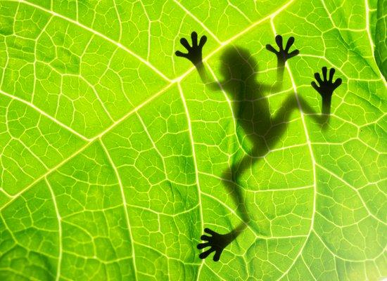 Bist du modisch im grünen Bereich?