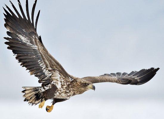 Juni-Lyrik: Da sah ich einen Adler fliegen