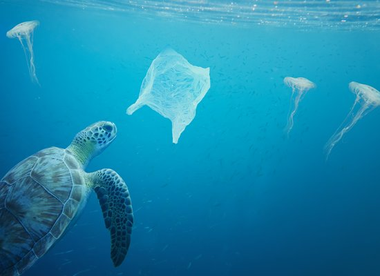 Quiz: Mehr Plastik als Meer