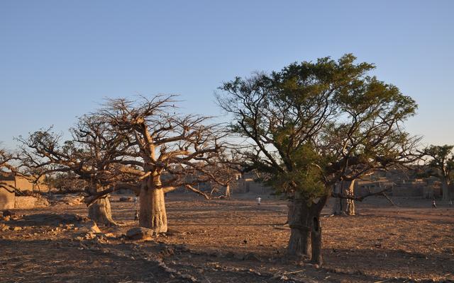 Baobab-Bäume prägen das Landschaftsbild.