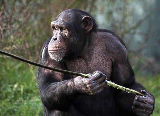 Höher, schneller, weiter: Tierische Rekorde